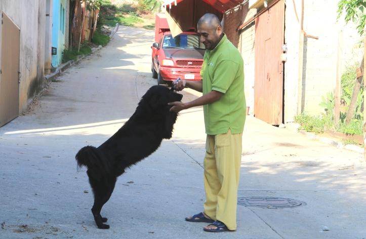 1-mascotas-oaxaca-de-juarez.jpg