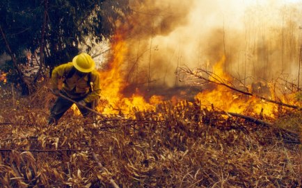 Incendio-forestal-1.jpg