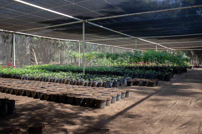 Bosque El Tequio  2.jpg